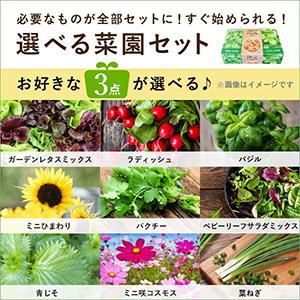 【最短即日出荷】選べる菜園セット3点