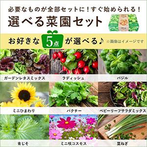 【最短即日出荷】選べる菜園セット5点
