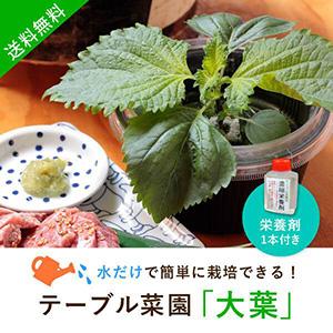 【送料無料】テーブル菜園「大葉」+栄養剤1本