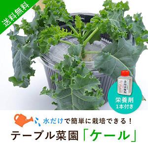 【送料無料】テーブル菜園「ケール」+栄養剤1本