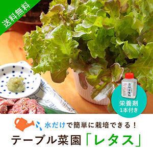 【送料無料】テーブル菜園「レタス」+栄養剤1本