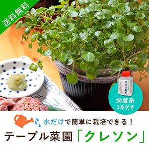 【送料無料】テーブル菜園「クレソン」+栄養剤1本