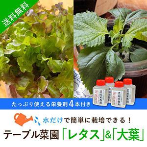 【送料無料】テーブル菜園「レタス」「大葉」+栄養剤4本
